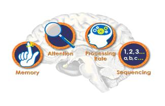 Maps brain 2010